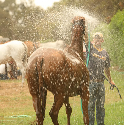 Aprende a bañar a un caballo