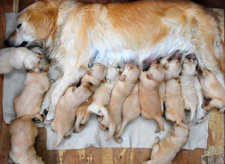 Cachorros perritos