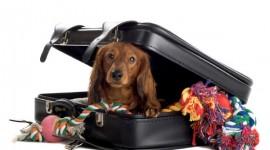 Perro maleta de viaje
