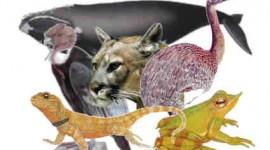 Como evitar la extinción de más especies animales