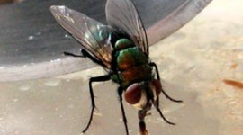 repeler moscas