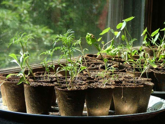 aprender a cuidar de las plantas