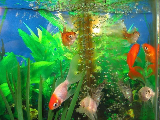 como cuidar de los peces