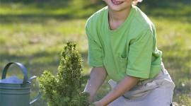 plantando un arbol