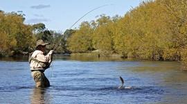 Aprende a practicar la pesca deportiva