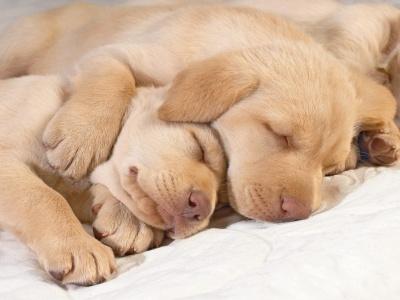 Cuidar perro
