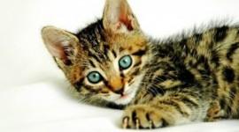 Aprender a cuidar un gato