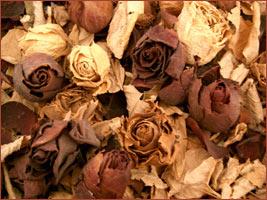 Aprender como secar flores